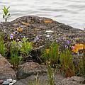 Colored Rocks by Lois Handel