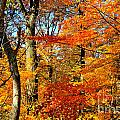 Colorfall Trees by Jay Nodianos