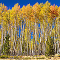 Colorful Aspen Panorama by James BO  Insogna