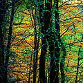 Colorful Autumn by Edgar Laureano