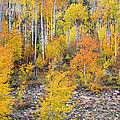 Colorful Autumn Forest In The Canyon Of Cottonwood Pass by James BO  Insogna