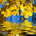 Colorful Autumn Leaves by Boon Mee