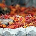Colorful Bird Bath by Yumi Johnson