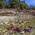 Colorful British Columbia Shoreline  by Pierre Leclerc Photography