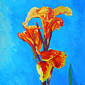 Colorful Canna by Margaret Saheed