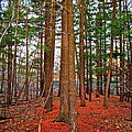 Colorful Carolina Forest by Frozen in Time Fine Art Photography