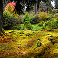 Colorful Carpet Of Moss In Benmore Botanical Garden by Jenny Rainbow
