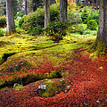 Colorful Carpet Of Moss In Benmore Botanical Garden. Scotland by Jenny Rainbow
