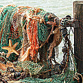 Colorful Catch - Starfish In Fishing Nets by Gill Billington
