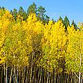 Colorful Colorado 2 by Brian Harig