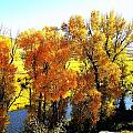 Colorful Cottonwoods by Gerald Blaine