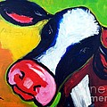 Colorful Cow by Lidija Ivanek - SiLa