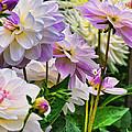 Colorful Dahlia Garden by Lorrie Morrison