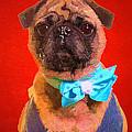 Colorful Dapper Pug by Edward Fielding