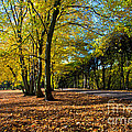 Colorful Fall Autumn Park by Michal Bednarek