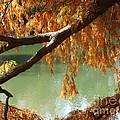 Colorful Fall Bald Cypress by Robert D  Brozek