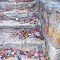 Colorful Fall Leaves Autumn Stone Steps Old Mentone Inn Alabama by Rebecca Korpita