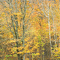 Colorful Fall Trees In Maine by Keith Webber Jr