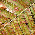 Colorful Fern Square by Carol Groenen
