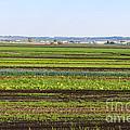 Colorful Fields by Les Palenik