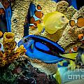 Colorful Fish by Cheryl Baxter