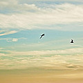 Colorful Flight by Janie Johnson