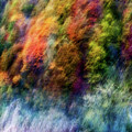 Colorful Forest by Wei He