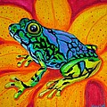 Colorful Frog by Nick Gustafson