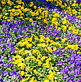 Colorful Garden by Aimee L Maher ALM GALLERY