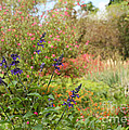Colorful Garden In Spring by Sabrina L Ryan