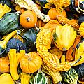 Colorful Gourds  by John Trax