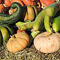 Colorful Gourds by Kimberly Perry
