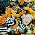 Colorful Gourds  by Phil McCollum