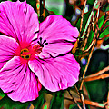 Colorful Hibiscus by Alice Gipson