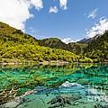 Colorful Lake At Jiuzhaigou China by Fototrav Print