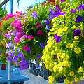 Colorful Large Hanging Flower Plants 1 by Jeelan Clark