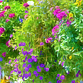 Colorful Large Hanging Flower Plants 3 by Jeelan Clark