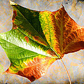 Colorful Leaf On The Ground by Mariola Bitner