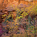 Colorful Leaves On A Tree by Panoramic Images