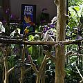 Colorful Macaw And Other Birds At The Jurong Bird Park In Singapore by Ashish Agarwal