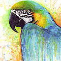 Macaw Painting by Olga Shvartsur