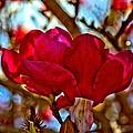 Colorful Magnolia Blossom by Scott Hill