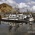 Colorful Morning Harbor by Sharon Foster
