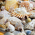 Colorful Ocean Seashells 1 by Andee Design