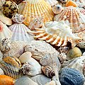 Colorful Ocean Seashells 2 by Andee Design