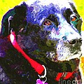 Colorful Old Dog by Barbara Griffin