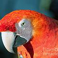Colorful Parrot by Gunter Nezhoda
