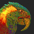 Colorful Parrot by Ingrid Smith-Johnsen