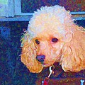 Colorful Poodle by Barbara McDevitt