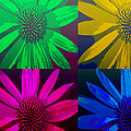 Colorful Pop Art Flowers by Ann Powell